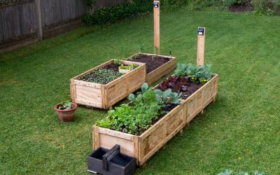 A Project for Spring – Grow Your Own Vegetables Using Vegetable Boxes